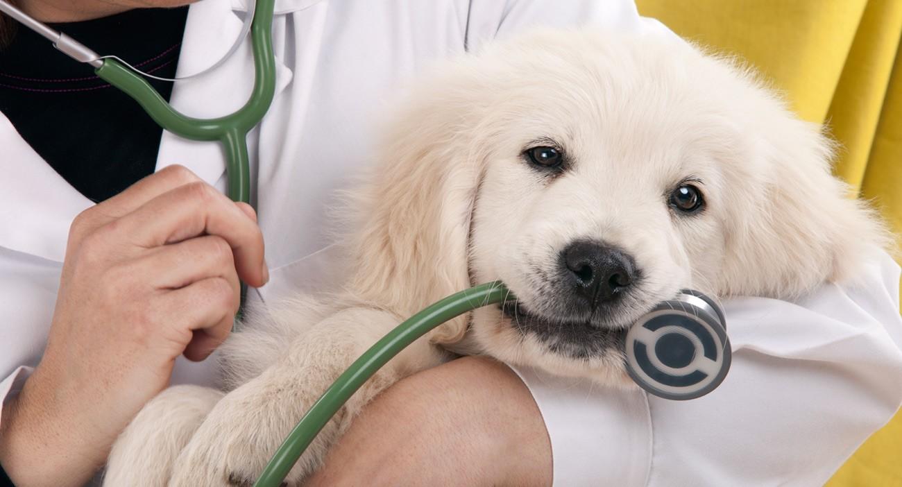 Como escolher o veterinário para cuidar do meu pet