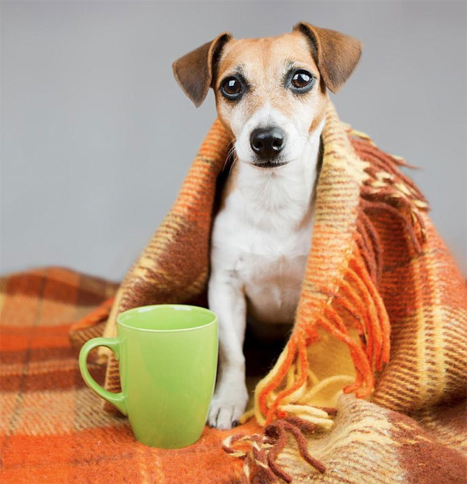 Cachorro no frio - Dicas de cuidado no inverno