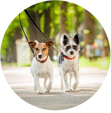 Cães passeando sem vermes - SEMVERMES