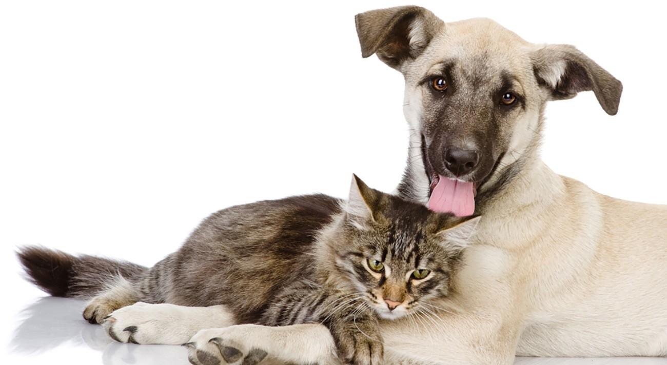 Coleiras antipulgas para cães e gato funcionam