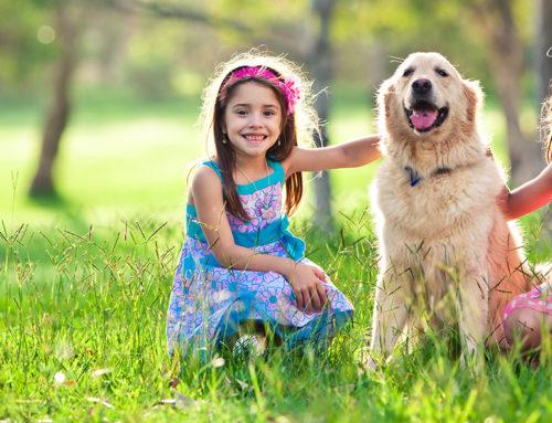 10 dicas para cuidar bem do cachorro no verão