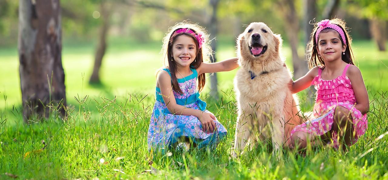 Como cuidar bem dos cães no verão