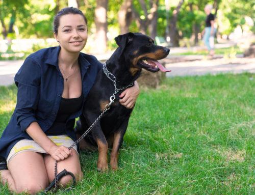 Pulgas e carrapatos no verão: saiba como cuidar do seu pet e da sua casa para evitar infestações