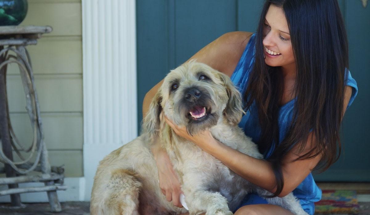 Descubra como curar sarna de cachorro e gato de forma eficaz