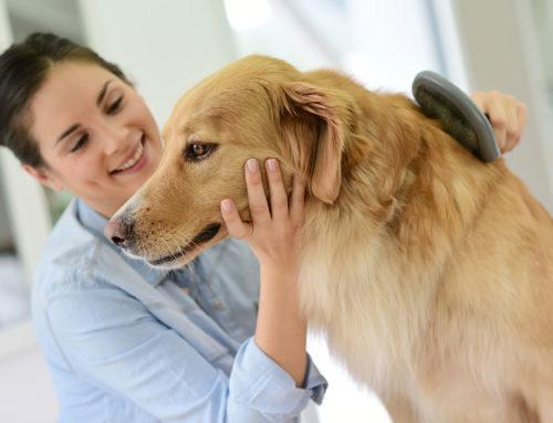 Como diminuir a queda de pelos em cachorros e gatos?