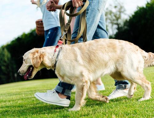 Como o ambiente influencia na vermifugação de cães e gatos?