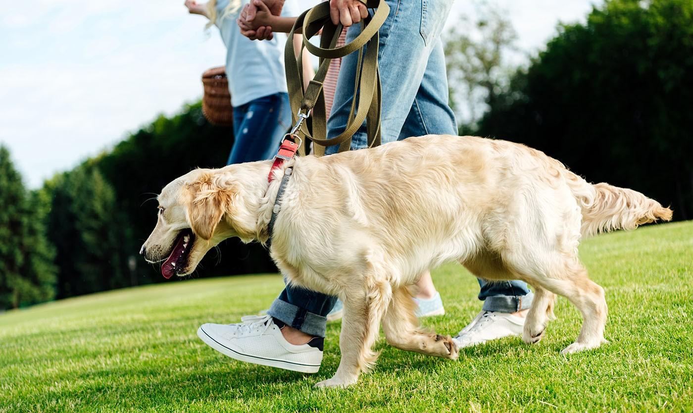 O ambiente influencia na vermifugação de cães e gatos