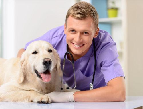 Como tratar dermatite canina: soluções simples e eficazes para resolver esse problema