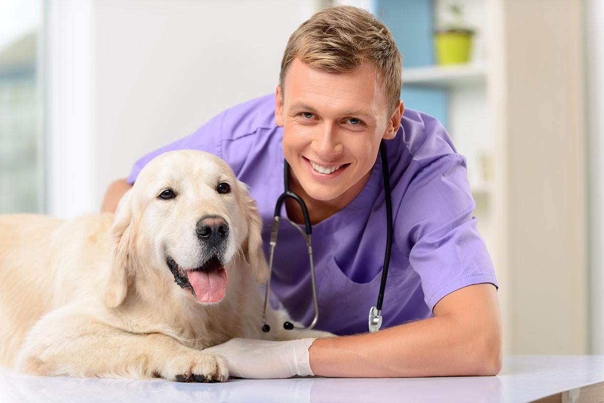 Como tratar dermatite canina