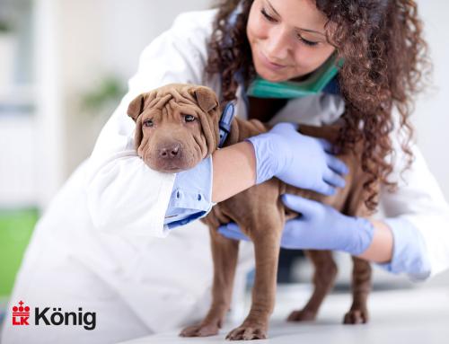 Dermatites – problemas de pele em cães e gatos