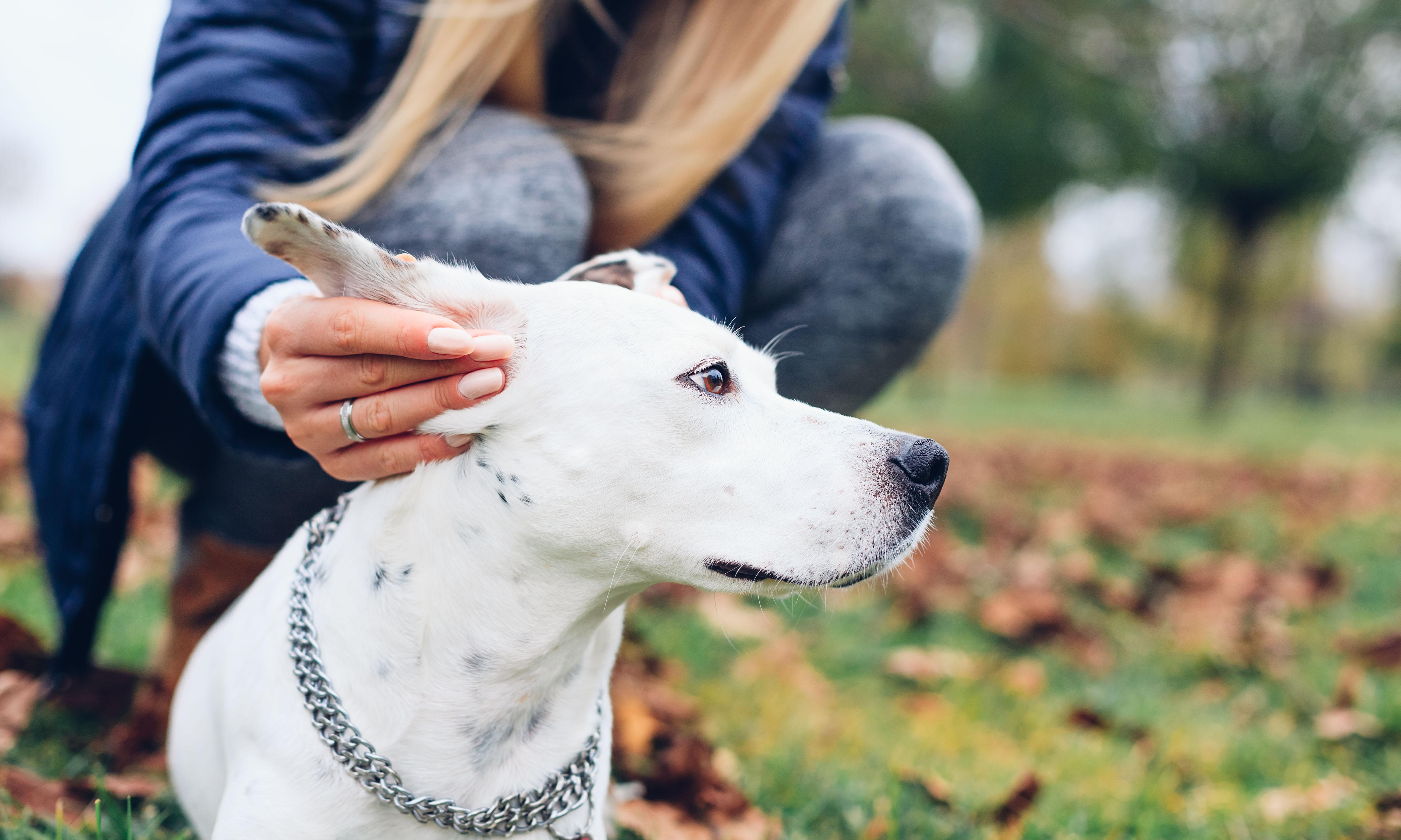 Doenças de pele em cachorro: como prevenir e cuidar no inverno?