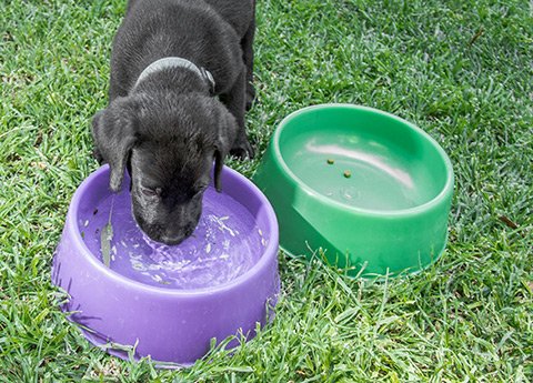 Muita água fresca e limpa à disposição