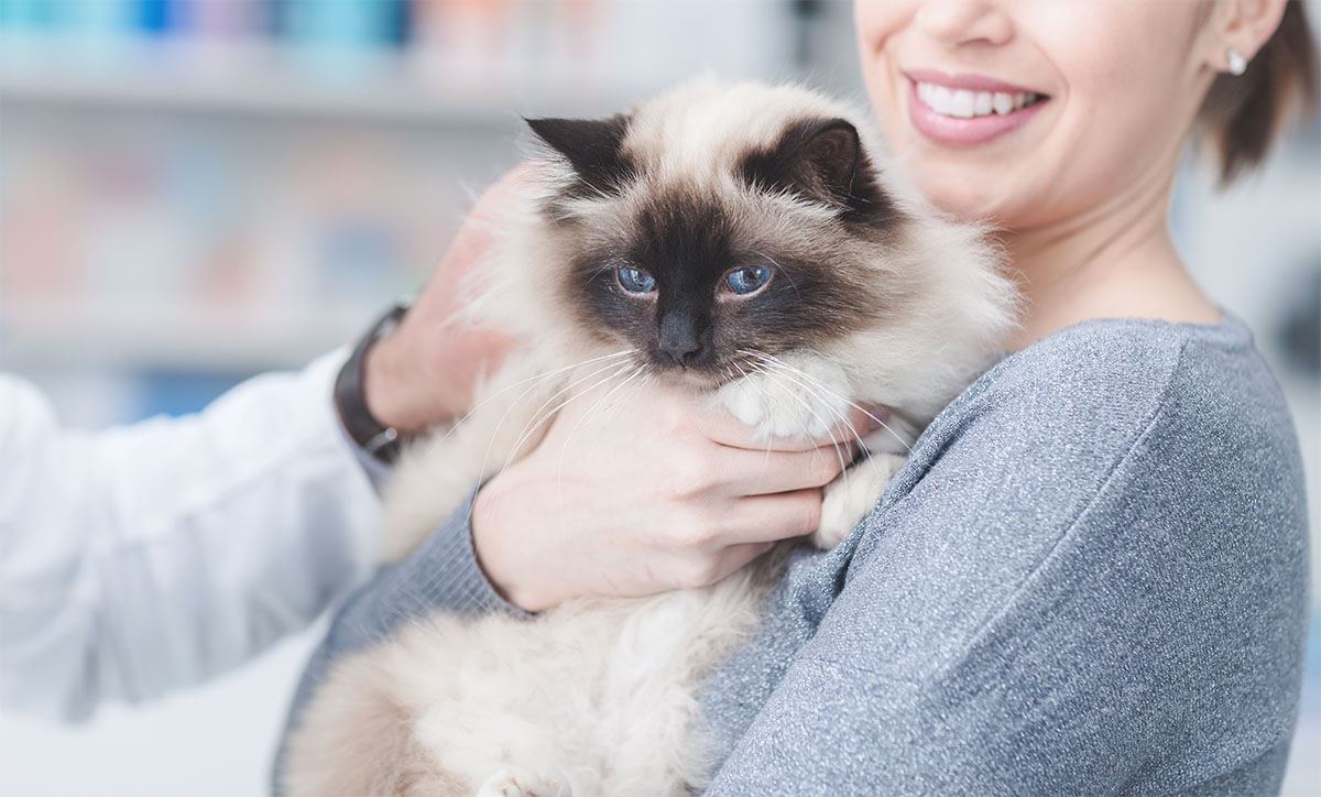 Os gatos também amam e não é só comida
