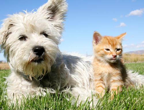 Primavera aumenta a incidência de alergia nos pets