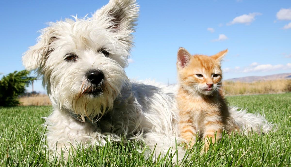 Primavera aumenta a incidência de alergia nos pets - cães e gatos