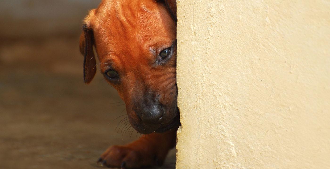 Situações de estresse em cães e gatos: como acalmar seu amigão