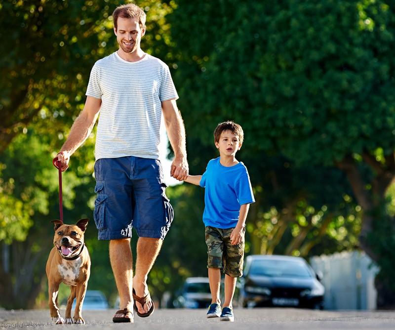 Os cães e gatos que costumam sair bastante para passear também estão mais sujeitos às infestações
